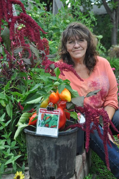 As The Tomato Lady, Elizabeth Casteel grew 178 varieties of tomatoes and 50 varieties of peppers last spring. Once dried, this Feher Oson paprika pepper can be ground into fresh paprika seasoning. (Pat Munts / The Spokesman-Review)