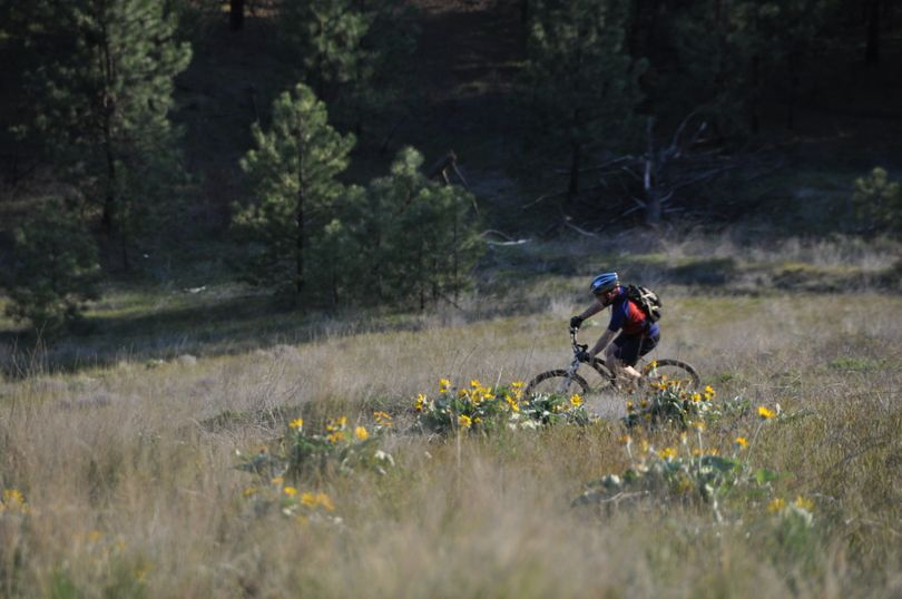 Mountain biking is popular on the South Hill bluff trails. (Rich Landers)