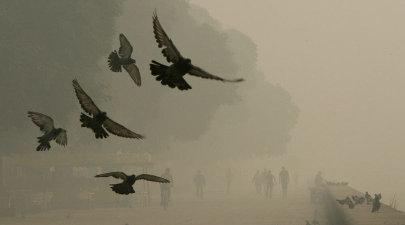 Wild birds may reduce their activity in smoky conditions, but they still must carry on to survive. (Associated Press)