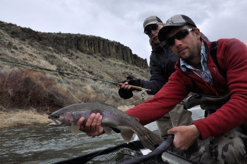 Stefan Woodruff of Ellensburg Angler releases an 18-inch rainbow trout for David Moershel of Spokane as they fly fish the Yakima River. (Rich Landers)