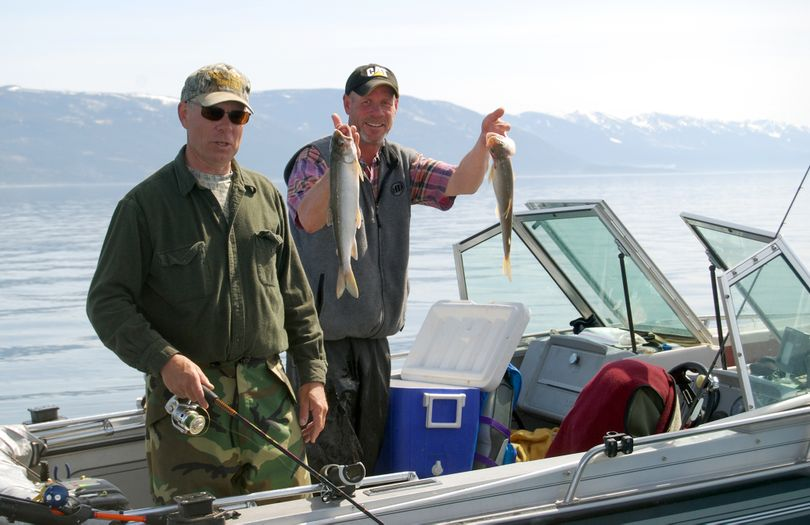 Steven Benson shows off two of more than 2,200 lake trout he, Mike, left, and Jerry (not pictured) have caught during Spring Mack Days. Their father started the three boys fishing on Flathead in the 1960s. Missoulian (VINCE DEVLIN Missoulian)
