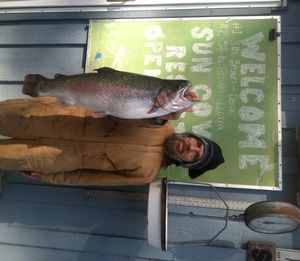 An angler who'd identify himself only as Mike holds a whopper rainbow he caught of the Sun Cove Resort dock at Clear Lake over the Memorial Day weekend, 2013. (Sun Cove Resort)