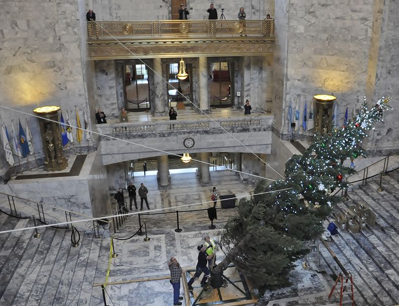 OLYMPIA -- This year's Holiday Kids' Tree gets hoisted into the stand in the domed Legislative Building Tuesday afternoon. (Jim Camden/The Spokesman-Review)
