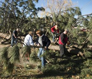 The family of homeowner Rachel Wier band together to cut up and clear a large ponderosa pine that landed and blocked the road at 4100 N. Hawthorne Street, Wed. Nov. 18, 2015. (Colin Mulvany / Spokesman-Review)