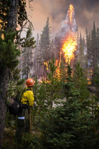 A firefighter watches flames from the Nethker Fire engulf trees at Payette National Forest on Aug. 7, 2019, near McCall, Idaho. A giant forest project in Idaho rejected by the 9th U.S. Circuit Court of Appeals is on again, and an environmental group aims to stop it a second time with another lawsuit. The U.S. Forest Service on Friday, Nov. 1, 2019, approved the 125-square-mile project on the Payette National Forest, with work expected to start this week. (Associated Press)